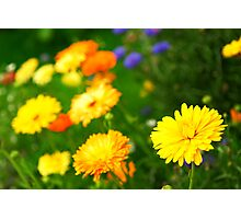 Flower background Photographic Print