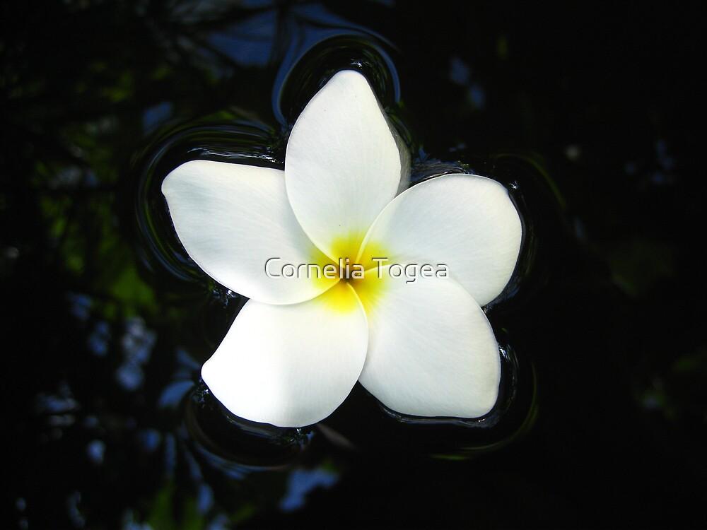 floating flower by Cornelia Togea