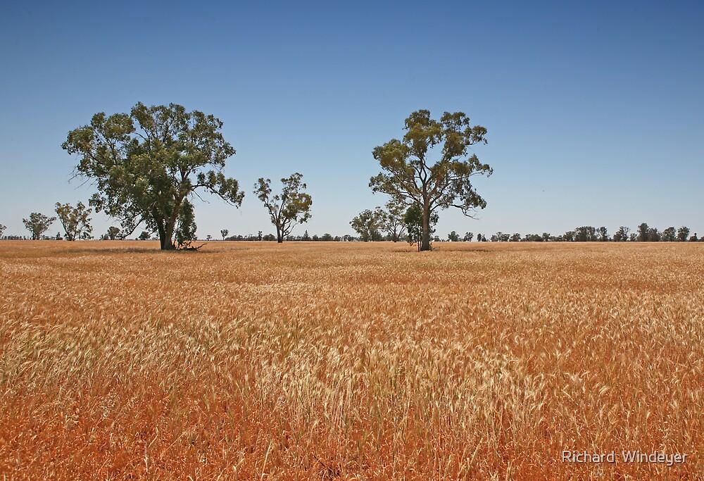 Wheat field by Richard  Windeyer