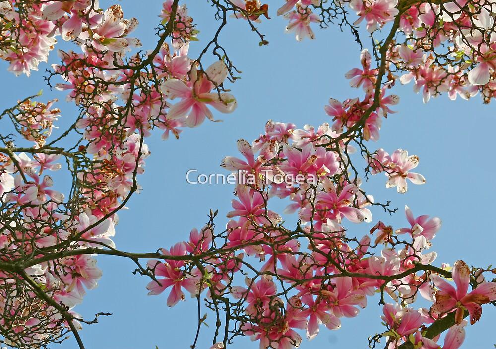 magnolia sky by Cornelia Togea
