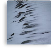 Icy winds Canvas Print