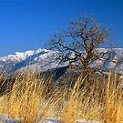 Mountain View by mymamiya