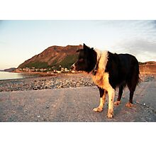 By the Beach with Indy Photographic Print