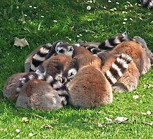 Lemurs by Marie-Karen Chandler