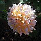 White flower by randi1972