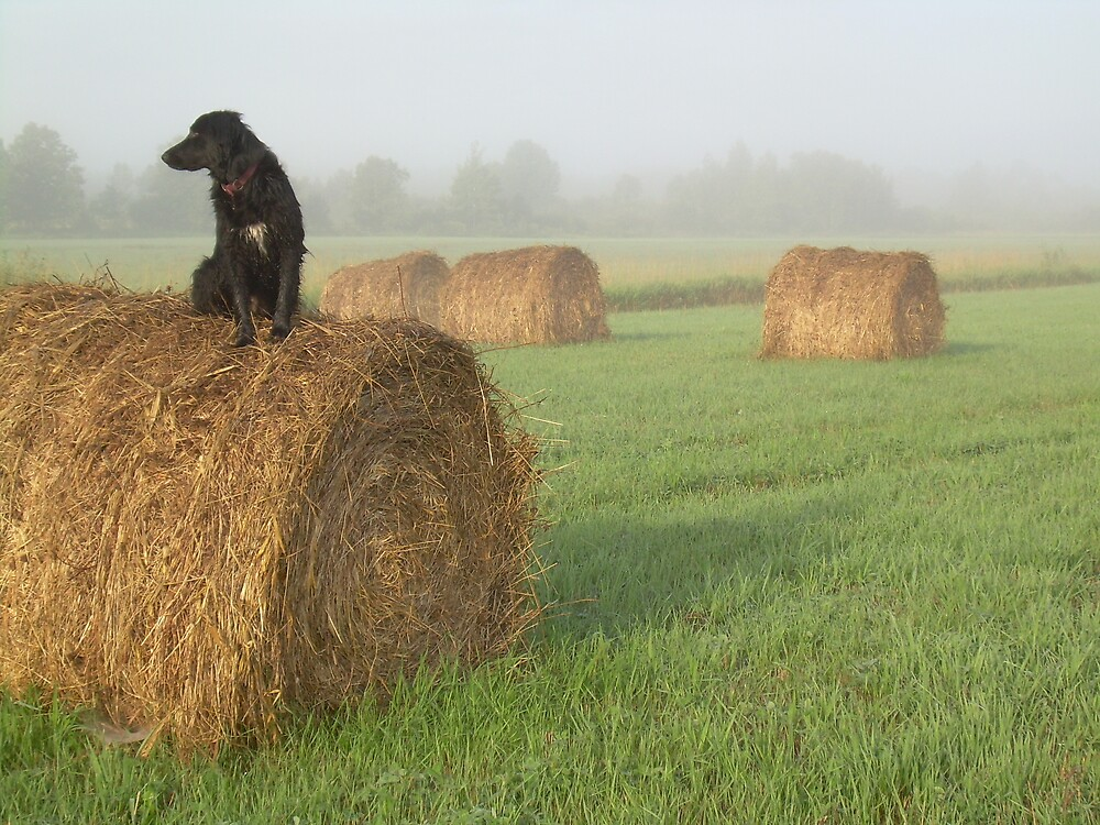 Dog in a Hay Field 612 by NiftyGaloot