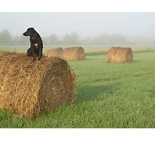 Dog in a Hay Field 612 Photographic Print