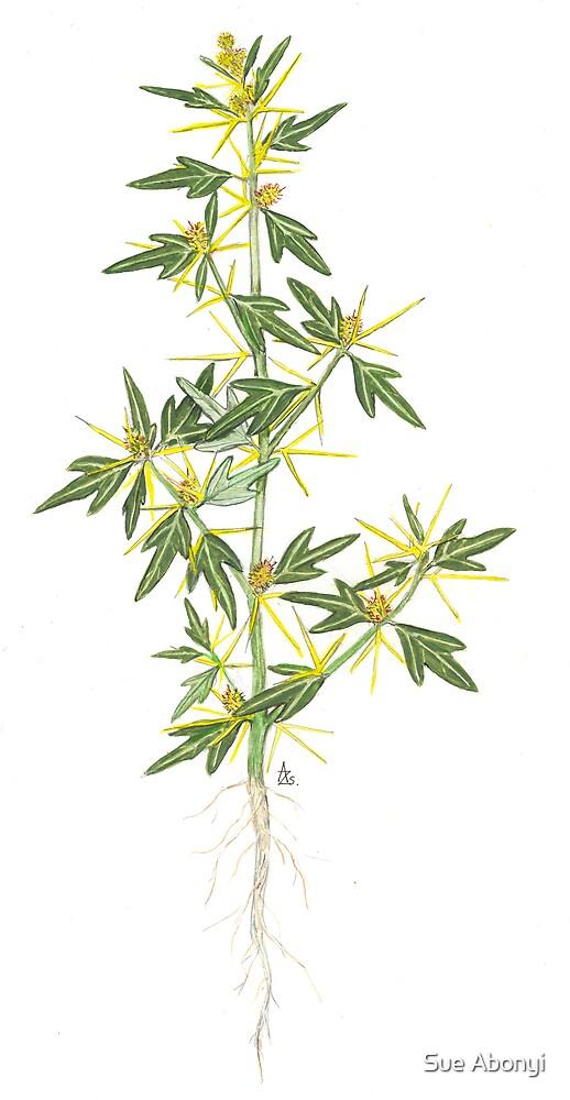 Spiny Cocklebur - Xanthium spinosum by Sue Abonyi
