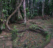 Ayahuasca vine by Inishiata
