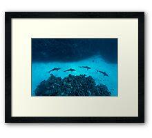 Shark Alley Framed Print