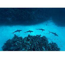 Shark Alley Photographic Print
