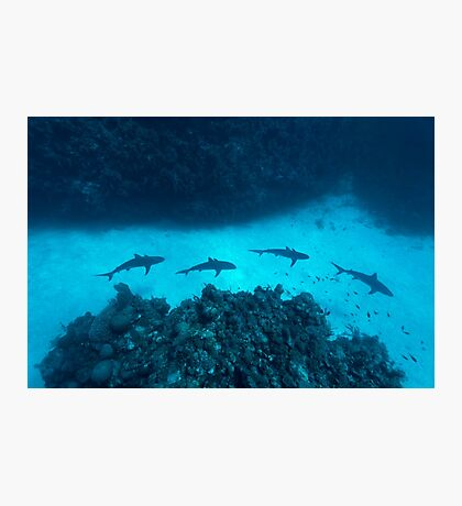Shark Alley Photographic Print