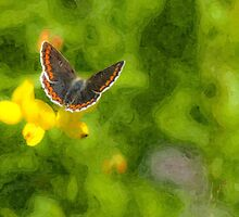 Artwork - Brown Argus by ncp-photography