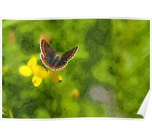 Artwork - Brown Argus Poster