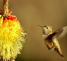 Flight of the Hummer by DawsonImages