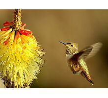 Flight of the Hummer Photographic Print