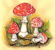 Fly Agaric - Amanita muscaria  by Sue Abonyi