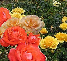 Roses rythm by Zuryn