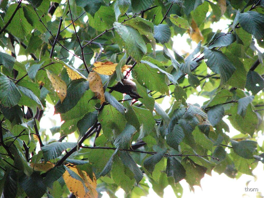 Upside Down Bird by thorn