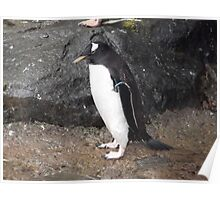 Penguin Stance Poster