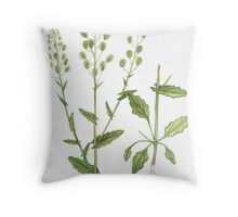 Field Penny-cress - Thlaspi arvense Throw Pillow
