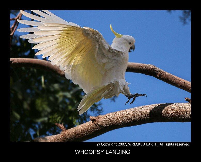 Whoopsie landing by Birte