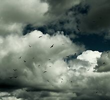 White clouds and Sea Gulls by davrberts