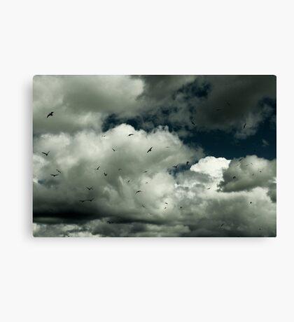 White clouds and Sea Gulls Canvas Print