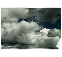 White clouds and Sea Gulls Poster