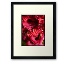 Rasberry Dew Framed Print