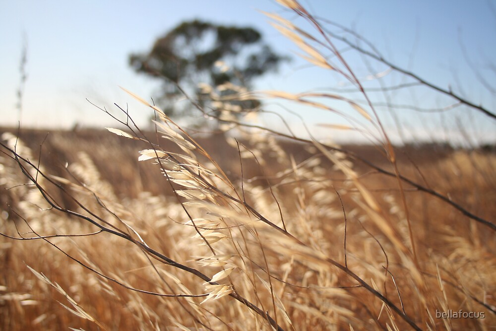 Breeze Over the Wheat Belt by bellafocus