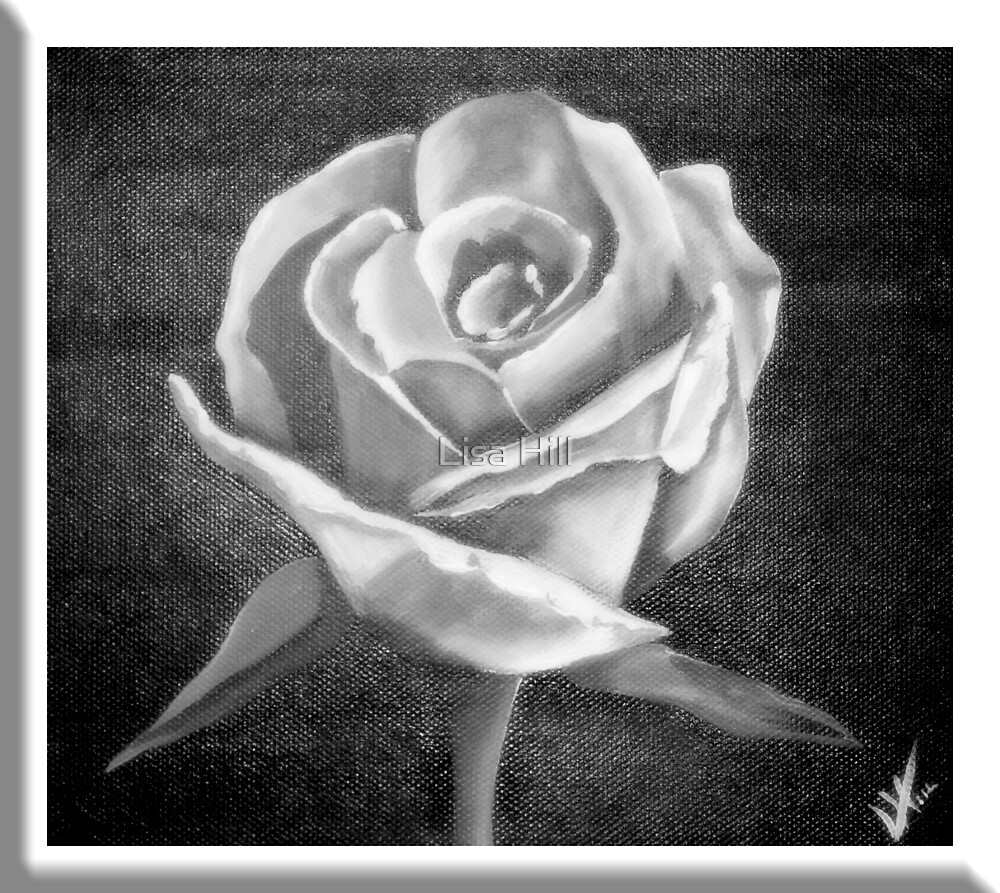 single white rose by Lisa Hill