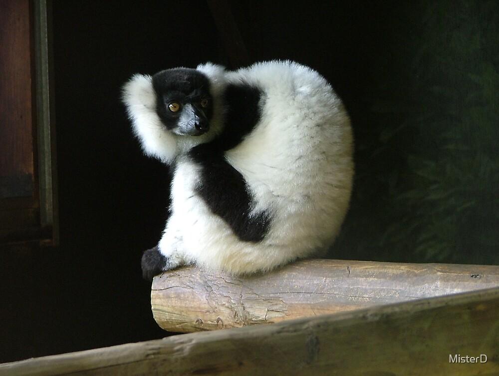 Madagascan lemur by MisterD
