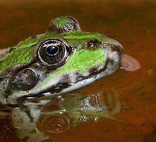 """""""Chives""""  The Star Frog summer in all its forms 9 (c)(h) by Olao-Olavia / Okaio Créations fz    200 by Okaio - Olivier Caillaud"""