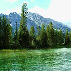 beautiful lake, tree, mountain and sky in Grand Teton National Park. by naturematters