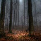 Misty Path to Flat Top Mountain by Robert Burns Miller