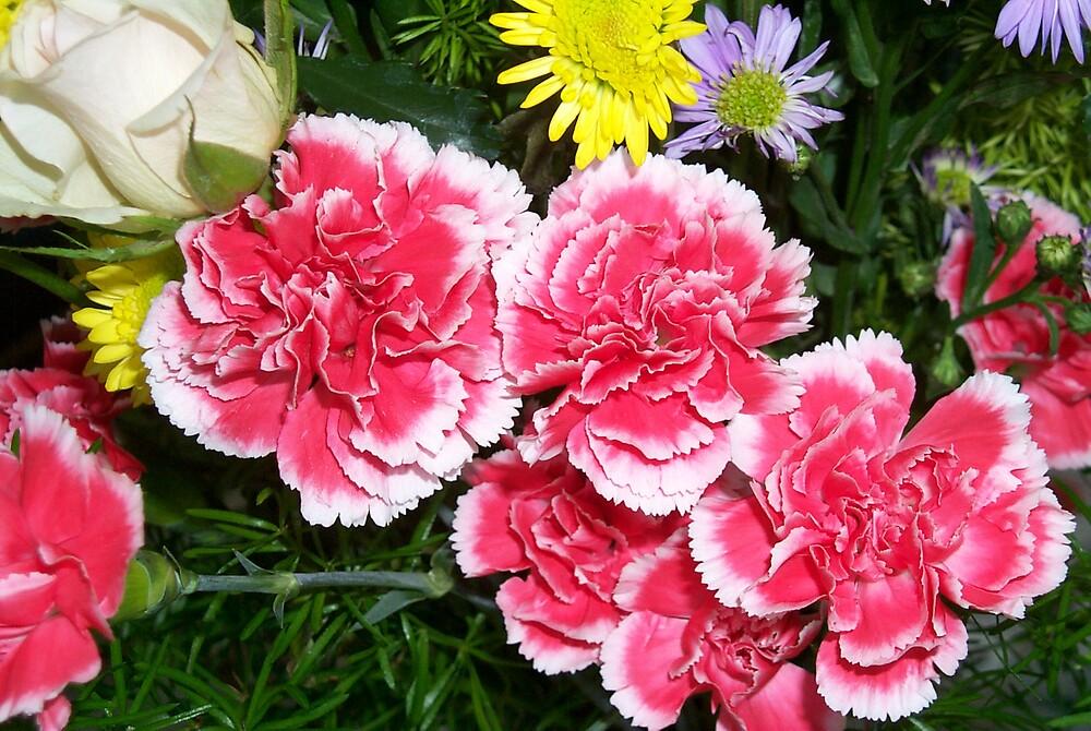 Mini Carnations by StudioN