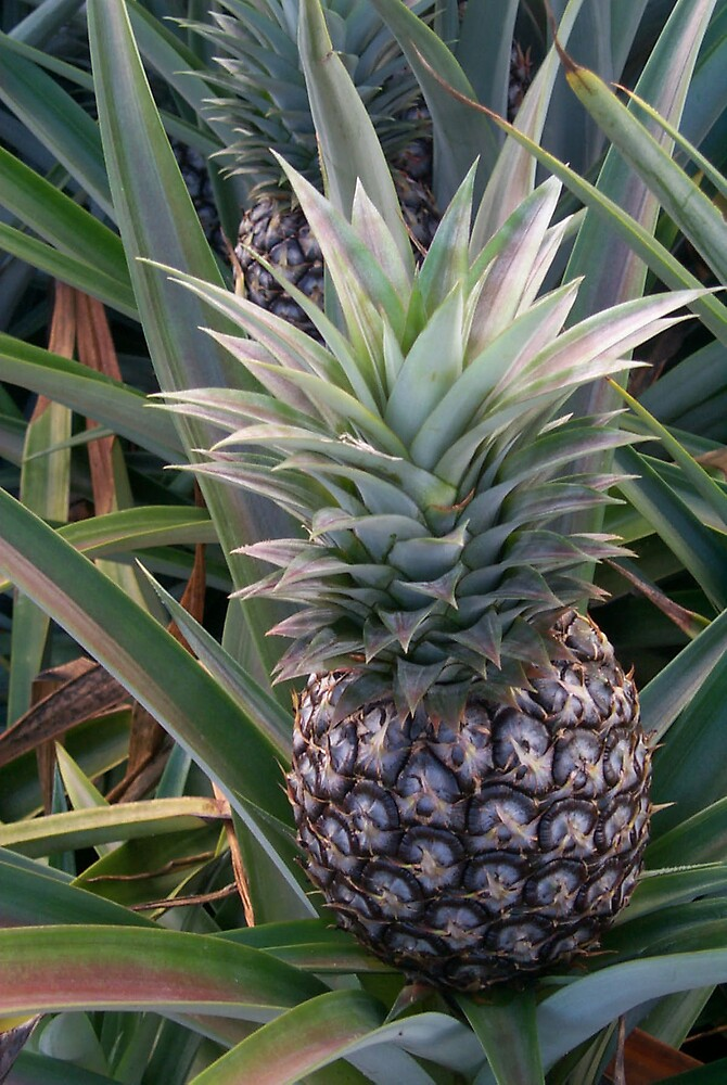 Pineapple by StudioN