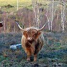 Wilds Of Somerset. UK by lynn carter