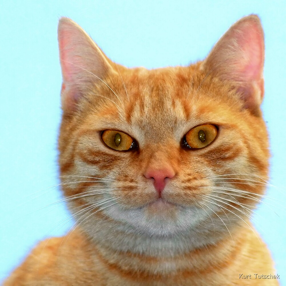 A cat with a mission by Kurt  Tutschek