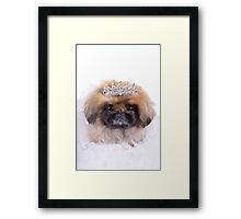 Princess Pekingese Framed Print