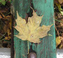 park bench leaf by emilyransom