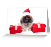 Christmas Pekingese Greeting Card