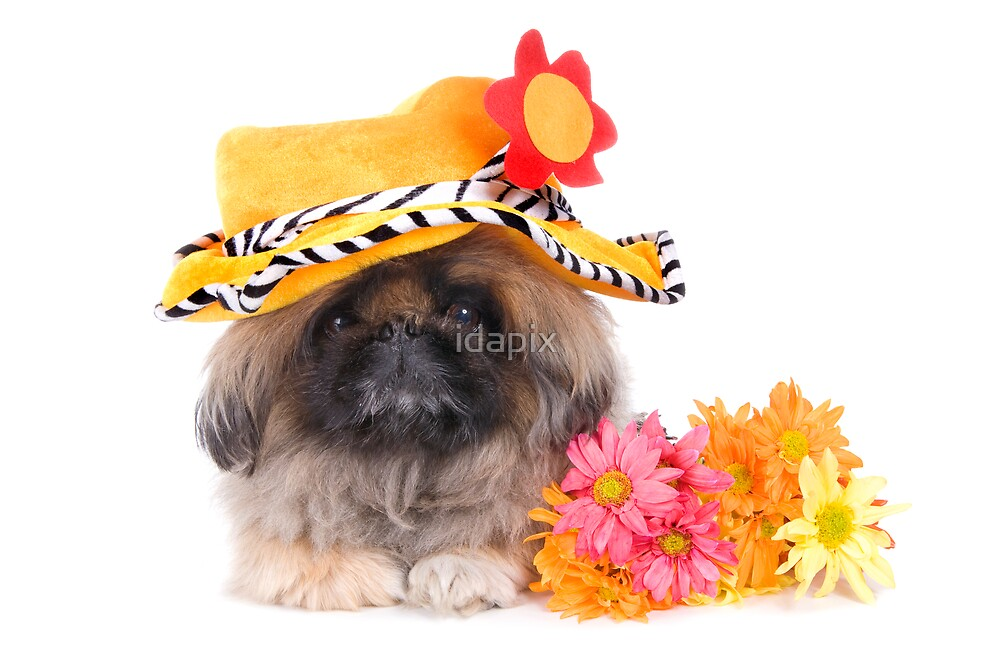 Flower Power Dog by idapix