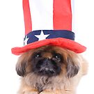 American Dog by idapix