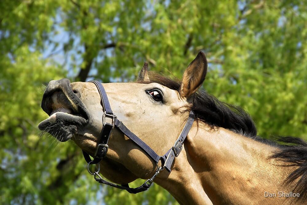 What aroused horses do by Dan Shalloe