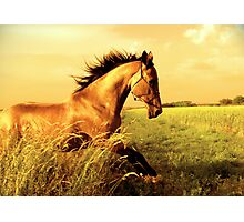 Golden frolic Photographic Print