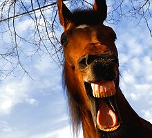 Laughing horse by Dan Shalloe