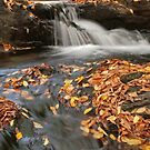 Fall Stream #2 by timpollock