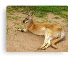 Relaxing Roo. Canvas Print